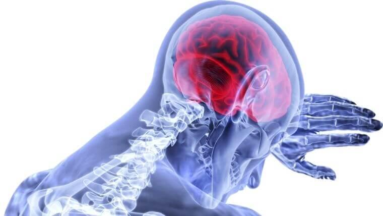 脳の構造とその働き